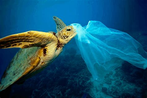 These plastic items kill whales, dolphins, turtles and