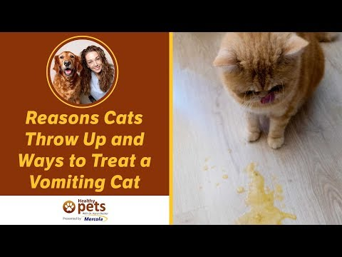 Why Do Cats Eat GRASS? Is It GOOD or BAD for Them? - Cat