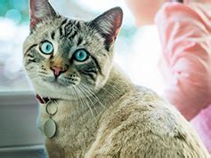 5 Dangerous Foods You Should Avoid Giving Your Cat | Hill