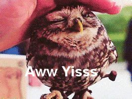 Aww Yiss GIFs - Find & Share on GIPHY