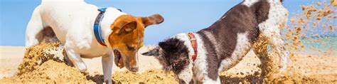 Dog & Pet Friendly Holiday Cottages to Rent, Self Catering