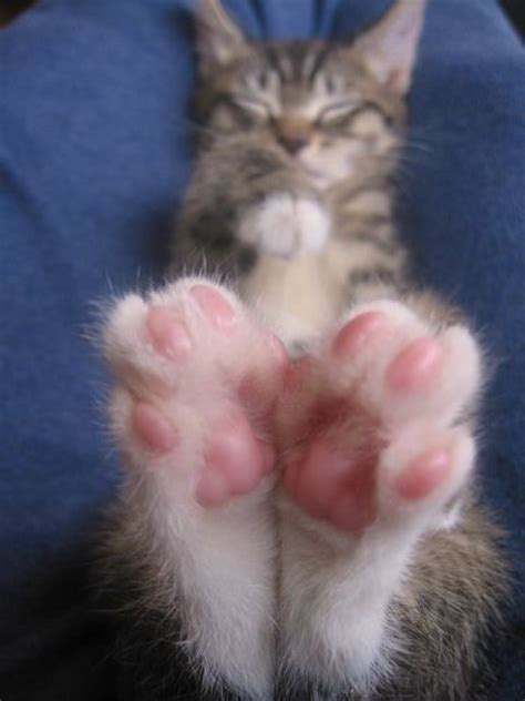 15 Cats That Love Showing Off Their Jelly Beans! - We Love