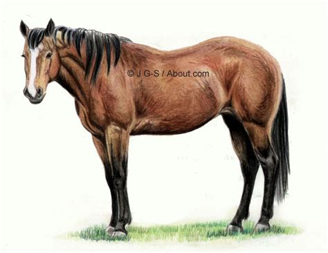 Tutorial to Teach You How to Draw a Realistic Horse in
