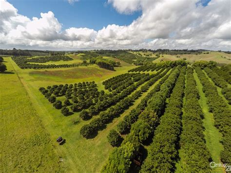Chinese interests buy macadamia farms around Dunoon